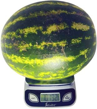 10. Digital Food Scale / Kitchen Scale / Postal Scale
